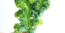 Superfood Kale Recipes / Kale is the king of greens! Loaded with nutrition and packed with flavor. Unique and creative kale recipes plus kale nutrition tips!