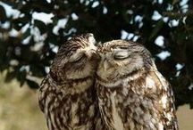 { fuck yeah owls } / Adorable owls. Good birds