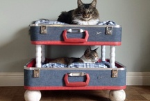 Pet Tips, Links etc! / by Anita Timms Mordue