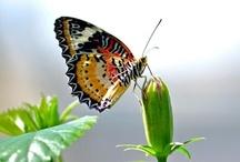 Butterflies / by Anita Timms Mordue