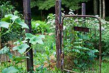 Backyard Dreams. / Urban farmer.  / by Julia Mishoe