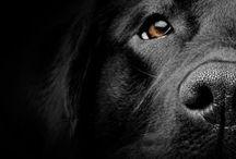 { B A U } / Dogs!