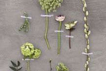 botanicals / by Amber Glanville