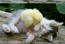 Cute fuzz balls  / by Avilene C