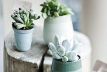 pottery love  / by Amber Glanville