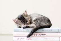 catscatscats / by Stina Berggren