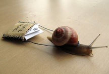 At a snails pace
