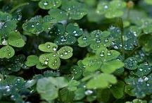 shamrocks and such / by Linda DeVaney