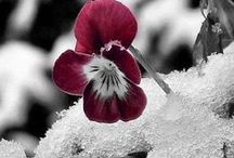 WINTER/DON'T LIKE IT BUT BEAUTIFUL / by Sharon Ray