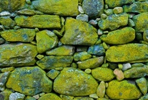 Green skylar polar