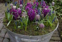 Garden / by Jennifer Braun