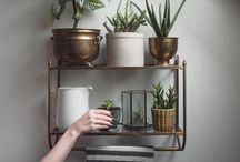 houseplants / by Mel Ridlon