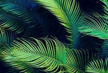Tropical Crush / by Amanda Pishkur ❥