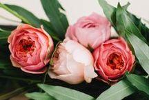 Flowers. / by Susan Duane