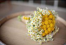 virág/flower/çiçek