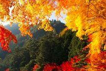 Autumn=Fall=Beautiful