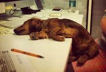 doofus dog...