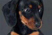 Puppy Stuff<3 / by Dillon Hernandez