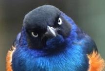 ANIMALS: BIRDS / by Marina S.