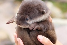 It Otter be Love / by Kristen Piontek