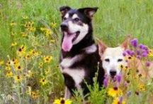Examiner.com Dogs / My Examiner columns and articles about dogs. #Examinercom