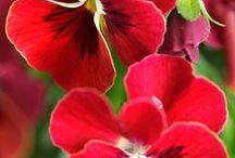 My favorite flowers / by Gail Blanchard - Daniels