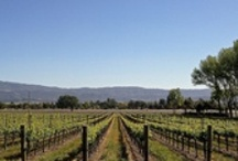 California Vines and Wines / There is nothing like California wines & California Wineries