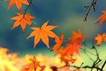 California Fall Celebrations  / Celebrating the beautiful Fall and Autumn season in California