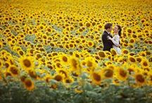 Tuscany Wedding / my favourite place on earth to film super 8 weddings!