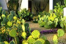 gardens / Landscape adventures