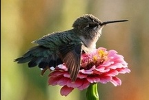 Dragon Fly's, Hummingbirds, Butterflies & Fairies ♥ / Dragon flys, hummingbirds, butterflies, fairies.... cute things that fly. / by Marilyn Martin