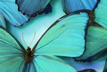 ♥Aqua, Turquoise, Blue-Green♥ / by Marilyn Martin