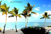DP - Tropical Dreams / Here are a few shots from my gallery photography. All prints are available for sale. I wrap all canvas works myself! Inquire for pricing and check out the rest of my inspiration on Facebook at www.Facebook.com/DrechselPhotography
