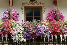Blooms / by Ann Thompson