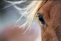 Eli's Horses / by Marilyn Martin