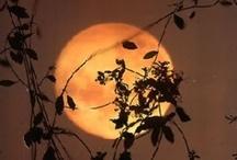 Full Moon / by Stefanie Beer