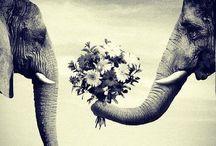   Be Love   / by Julianna Crane