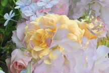Pastel THIS / by Marilyn Martin