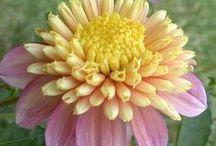 ♥Le Fleurs♥ / by Marilyn Martin