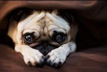 pugness / by Skye Miques