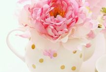 P Is For Peony / and  R is for Ranunculus... another favorite so similar, but peonies can survie a frost and ranunculus cannot even though they are perennials too! / by Janet Cameron