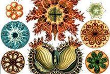 Illustrazione naturalistica - Nature illustration / by Progetto Didatticarte