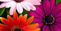FL❤WERS.                                                    All types of flowers. / By Adorable Life.                                       Beautiful flowers...