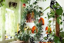 Indoor Plants | Conservatories / Indoor Plants Ideas - My idea of happy places- painting the indoors green