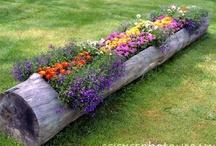 Gardening / by Dodie Bulatao