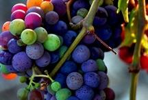 Harvest / by Dennis aka Maestro