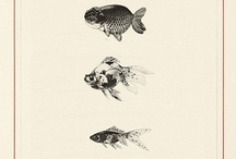 illustration - zoological & anatomy / by ALLE Studio