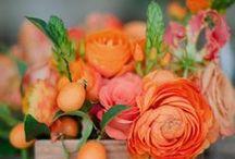 Belles Fleurs / by Colleen