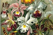 Flower Power / by April Johnston