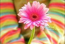 Colours / colours photo